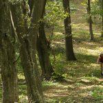 Шуменско плато 2012